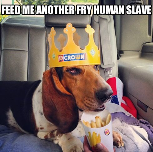 883ca5cb0d_funny-crown-dog-fry-slave-french-fries