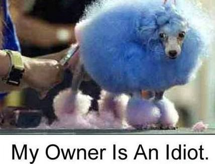 funny_poodle