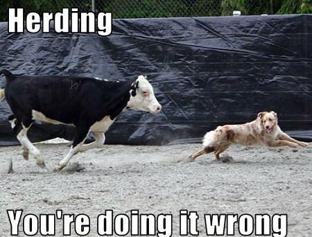 HerdingYou-re-doing-it-wrong-dogs-11954498-450-342