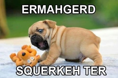 pug-meme-puppy-squeaky-toy