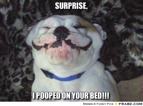 Still a better surprise than a dog