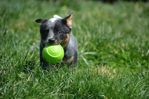 Best Puppy.