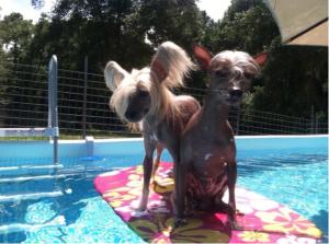 Surfs up, moondoggie!